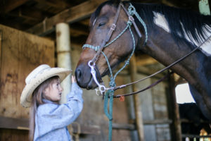 horse and livestock shows at the jefferson county fair