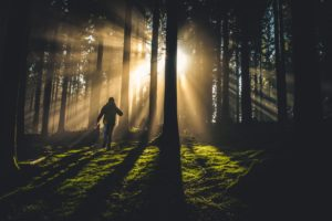 A person hiking through woods at sunrise.